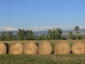 Beautiful Montana